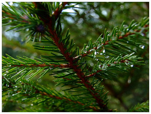 Evergreen content stays fresh all year just like an evergreen tree.